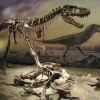 10 Facts about Albertosaurus