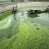 10 Facts about Algae
