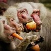 10 Facts about Baboons