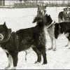 8 Facts about Balto