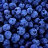 10 Facts about blueberries