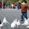10 Facts about Bird Flu