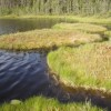 10 Facts about Bogs