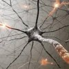 10 Facts about Brain Cells