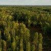 10 Facts about Boreal Forest