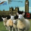 10 Facts about British Wool