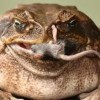 10 Facts about Cane Toads