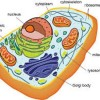 10 Facts about Cell Structure and Function