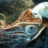 10 Facts about Cephalopods