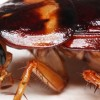 10 Facts about Cockroaches