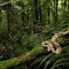 10 Facts about Congo Rainforest