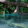 10 Facts about Daintree Rainforest