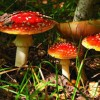 10 Facts about Decomposers