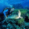 10 Facts about Deep Sea Diving