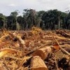 10 Facts about Deforestation in the Amazon Rainforest