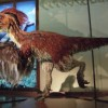 10 Facts about Deinonychus