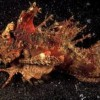 10 Facts about Devil Fish