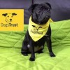 10 Facts about Dogs Trust
