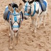 10 Facts about Donkeys