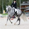 10 Facts about Dressage
