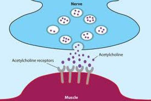 Acetylcholine Pictures