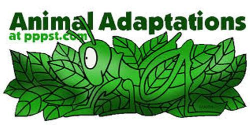 Adaptation Animals