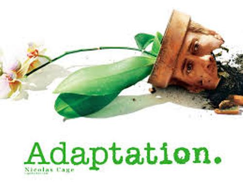 Adaptation Pic