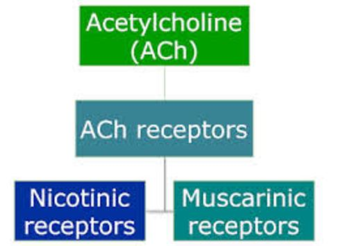 Facts about Acetylcholine