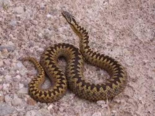Facts about Adders