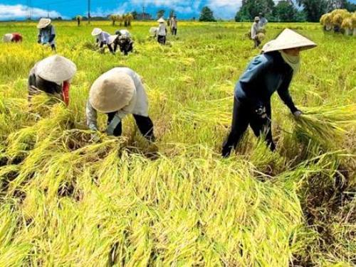 Agricultural Engineering in Vietnam
