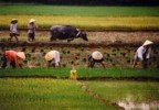 10 Facts about Agricultural Production