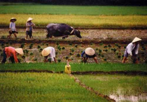 reason for low agriculture productivity Why is agricultural productivity low in a  aspect of indian agriculture productivity level is low in dry regions  main reason productivity is so low in.