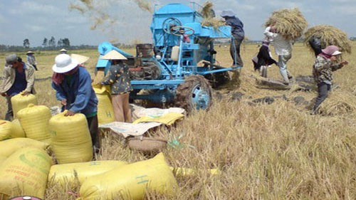 Agricultural Production Image