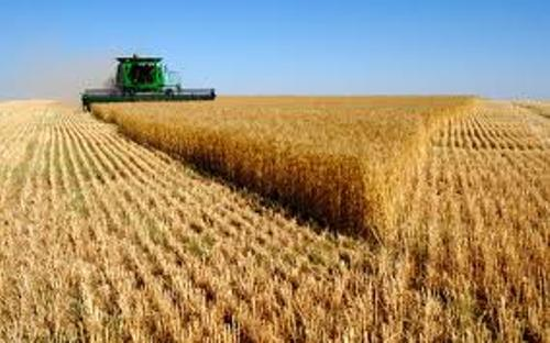 Agricultural Production Pictures