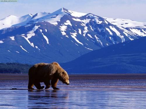 Жесть: Россия отобрала у Украины... Аляску (ВИДЕО)