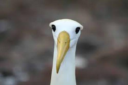 Albatrosses Cute