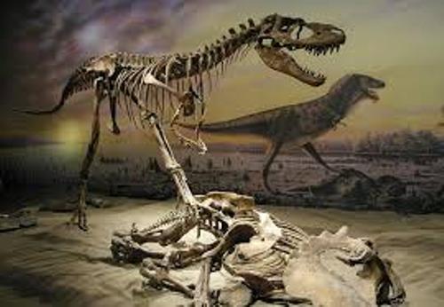 Albertosaurus  Image