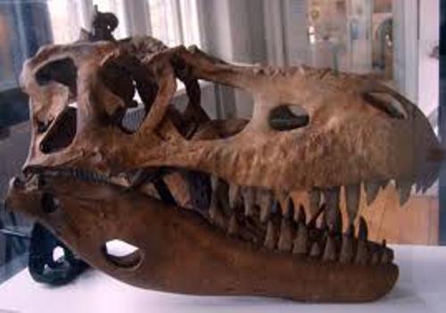 Albertosaurus  Pic