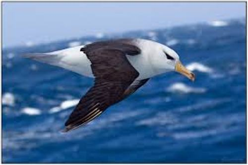 Facts about Albatrosses