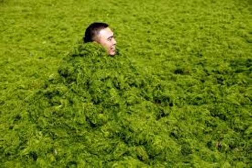 Algae in China