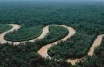 10 Facts about Amazon Rainforest