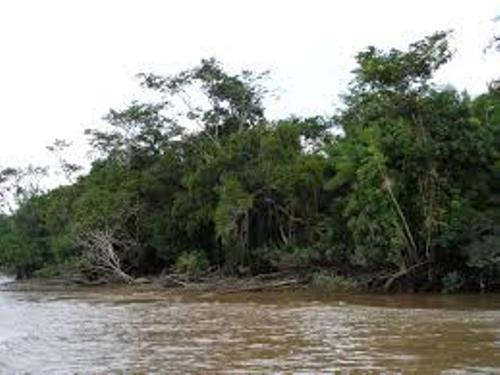 fact file about the amazon Check out these fun amazon river facts for kids learn about where the amazon river is located, how long it is, the wildlife that it supports and more enjoy our.