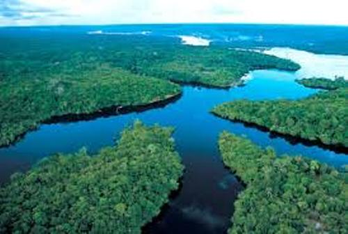 Amazon River Pic