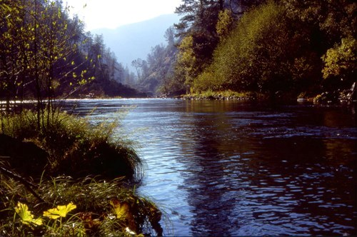 American River Image