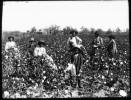 10 Facts about American Slavery