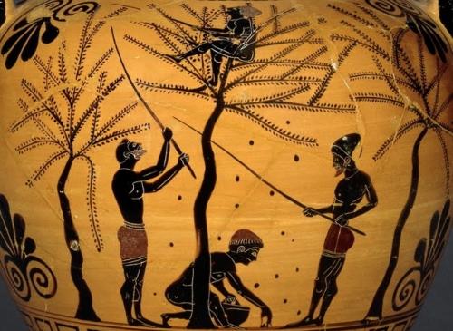 Ancient Greek Food Olive Harvest