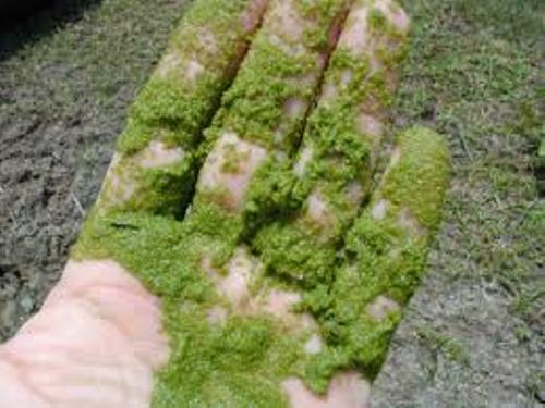 Facts about Algae