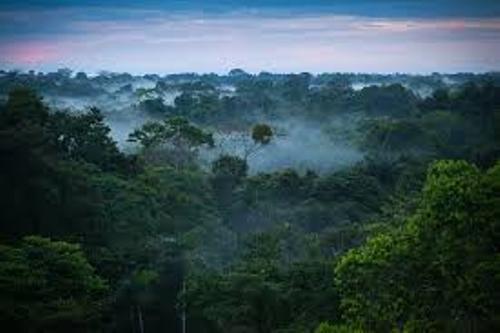 Facts about Amazon Rainforest