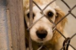 8 Facts about Animal Abuse