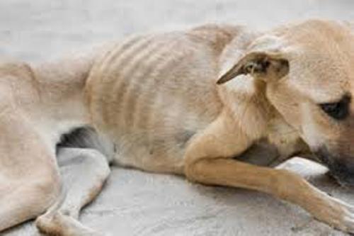 Animal Abuse Image